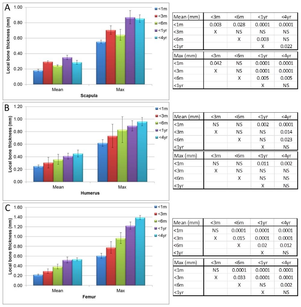 medium resolution of micro ct bone local thickness measurements