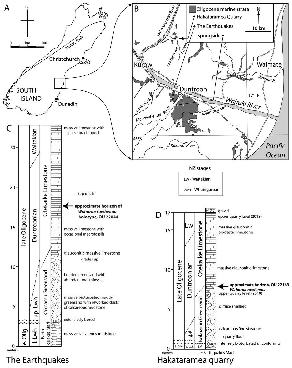 Anatomy, feeding ecology, and ontogeny of a transitional