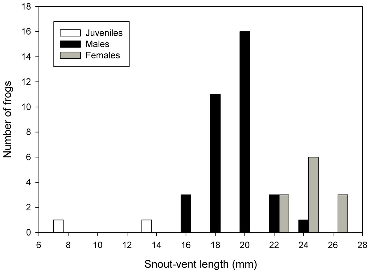 hight resolution of frequency distribution of snout vent lengths of psychrophrynella chirihampatu