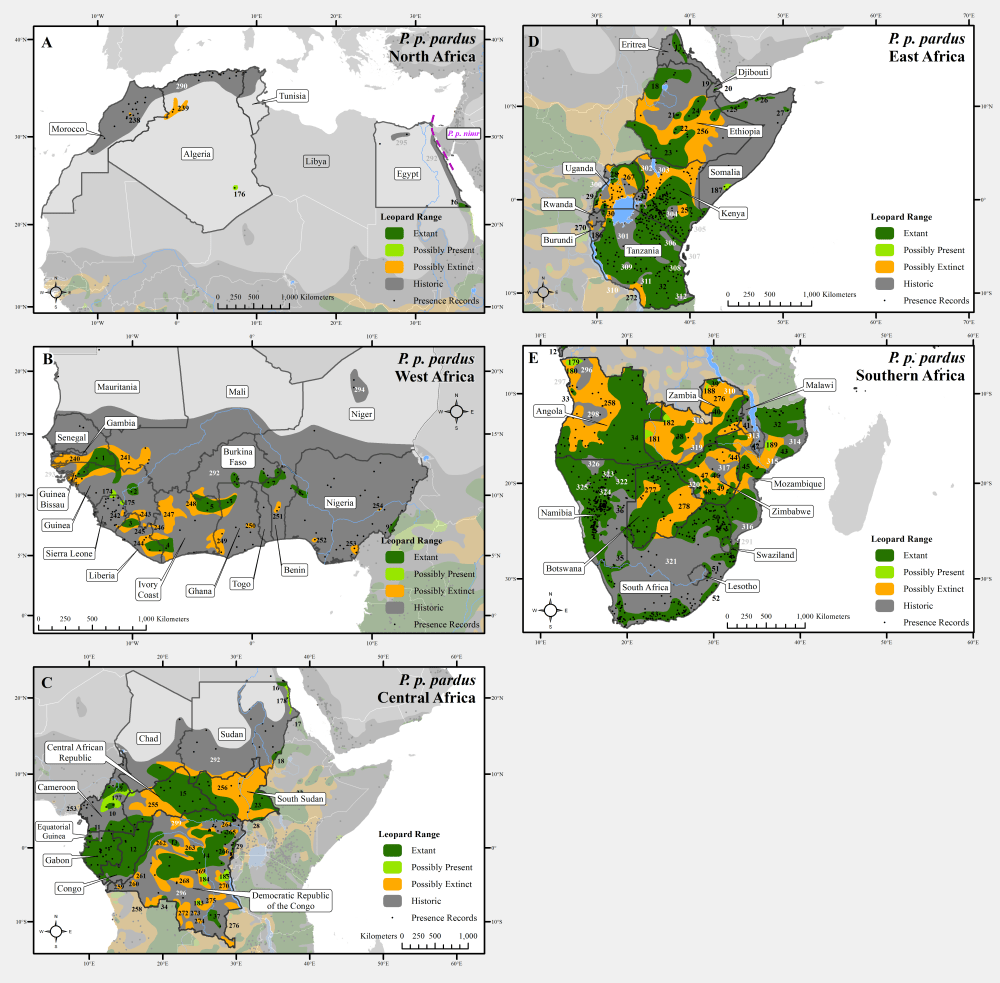 medium resolution of leopard range with presence records across africa