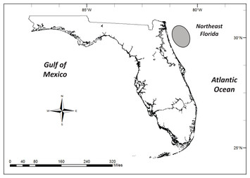 Age, growth and population structure of invasive lionfish