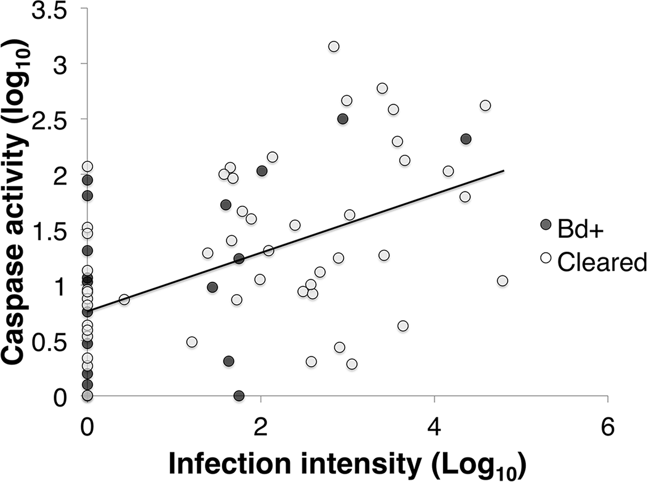 Epidermal cell death in frogs with chytridiomycosis [PeerJ]