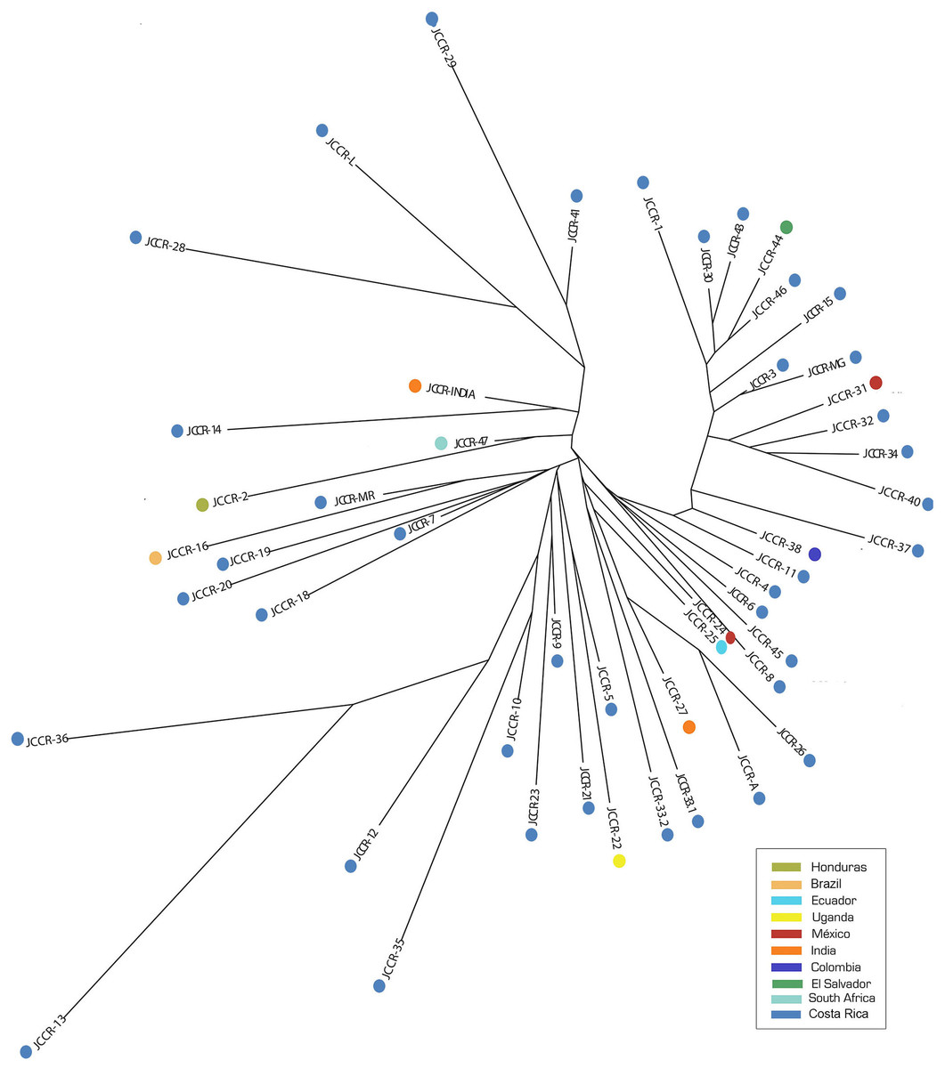 Molecular characterization and genetic diversity of