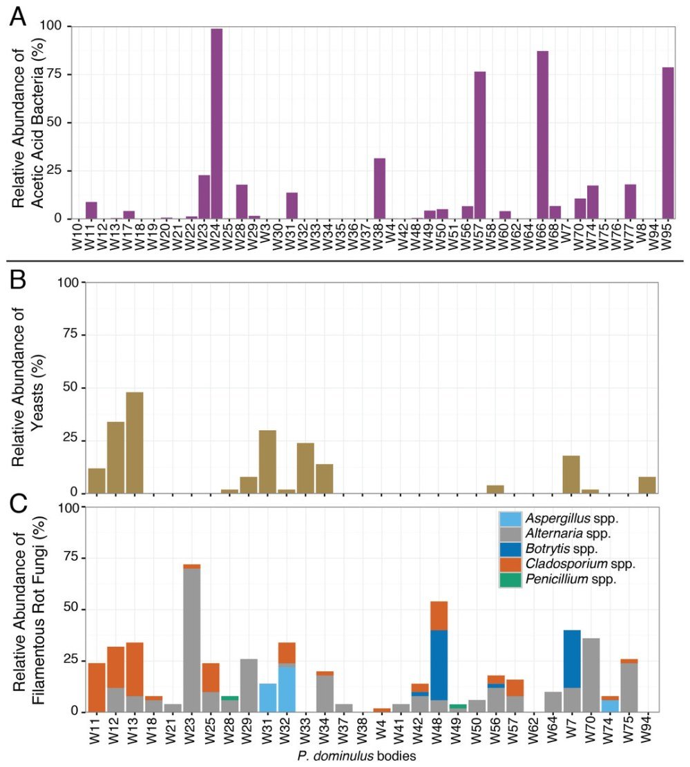 medium resolution of relative abundance of sour rot associated microorganisms in p dominulus