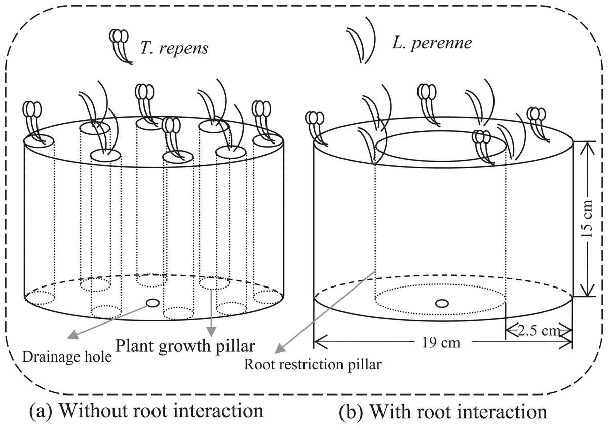 The Effects Of Arbuscular Mycorrhizal Fungi And Root