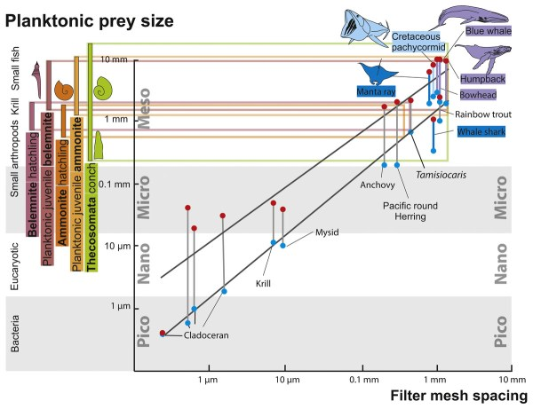 The old and the new plankton ecological replacement of