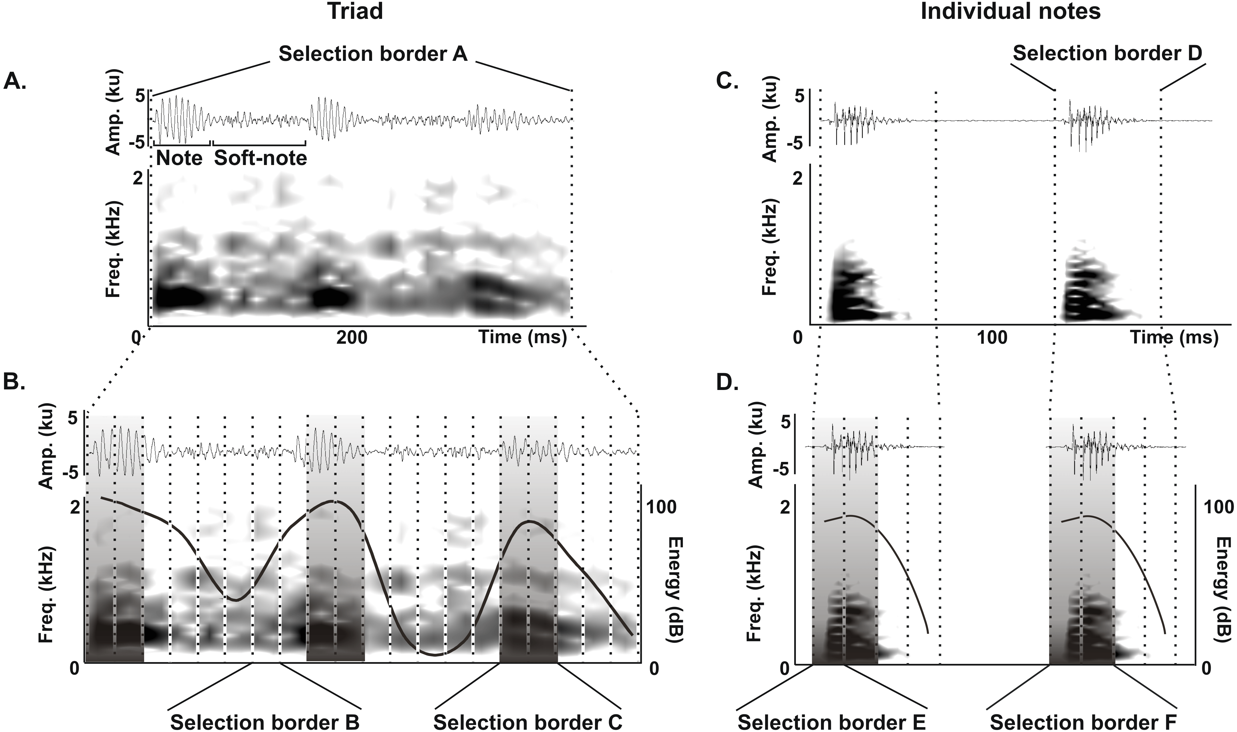 Ontogeny Of Long Range Vocalizations In A Neotropical