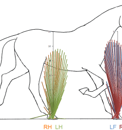 a simple method of equine limb force vector analysis and its potential applications [ 2900 x 1786 Pixel ]