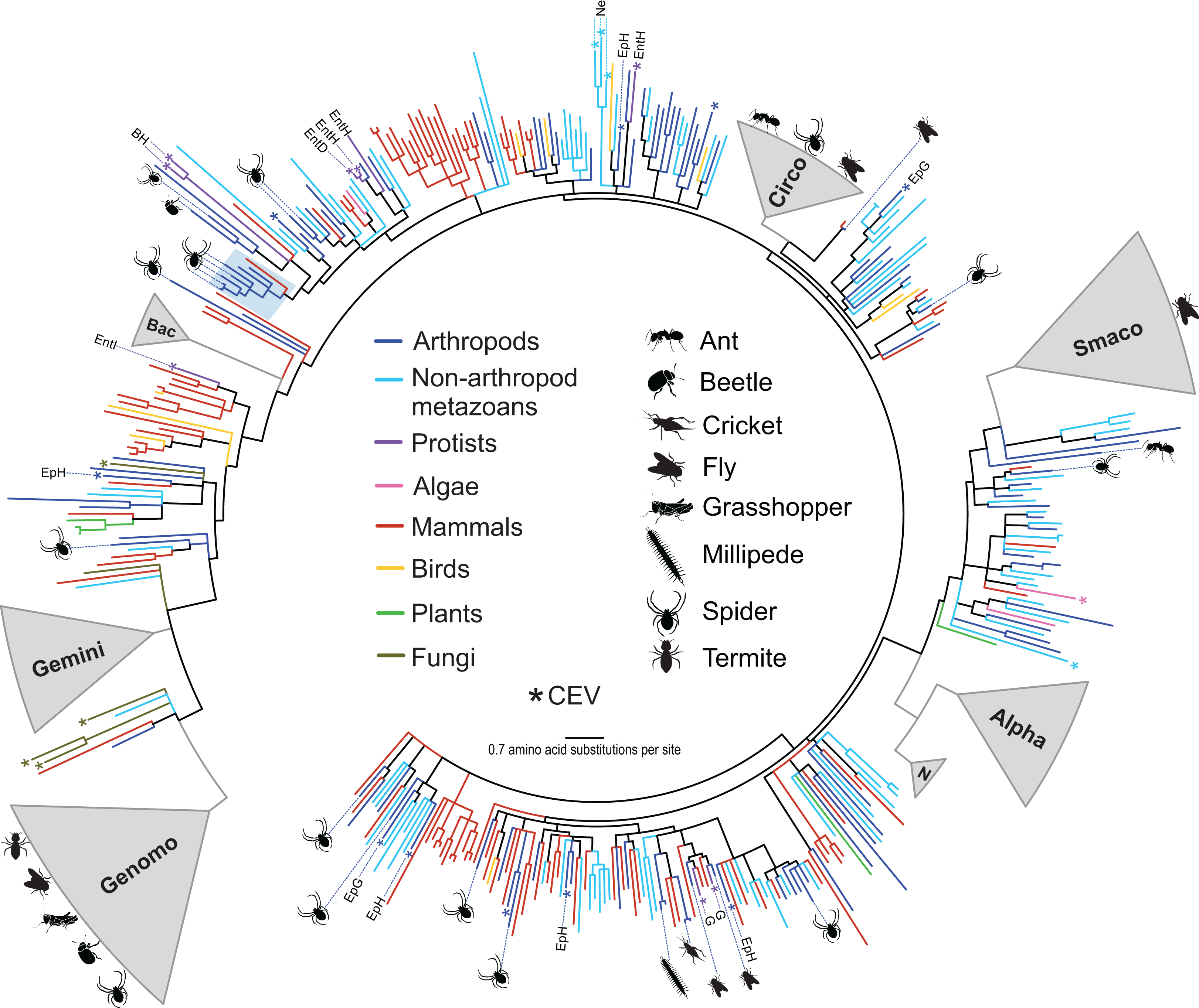Virus Discovery In All Three Major Lineages Of Terrestrial