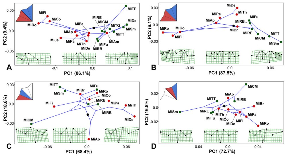 medium resolution of micrasterias phylogeny mapped onto the morphospaces represented by the pc1 vs pc2 ordination plots based