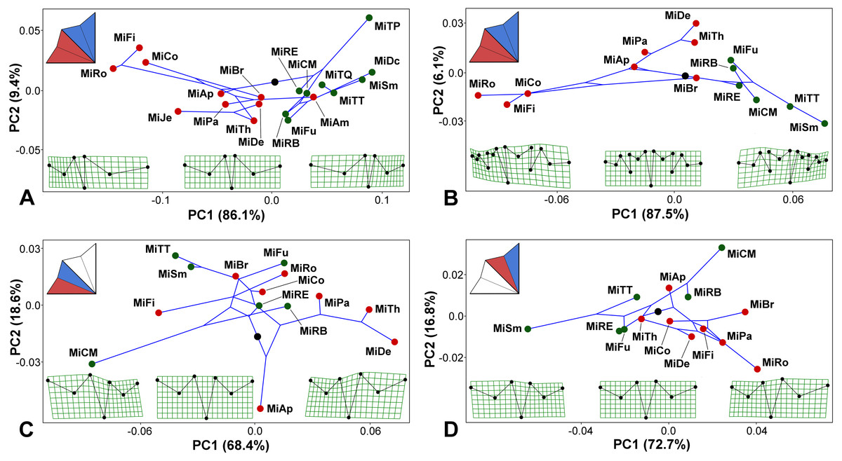 hight resolution of micrasterias phylogeny mapped onto the morphospaces represented by the pc1 vs pc2 ordination plots based
