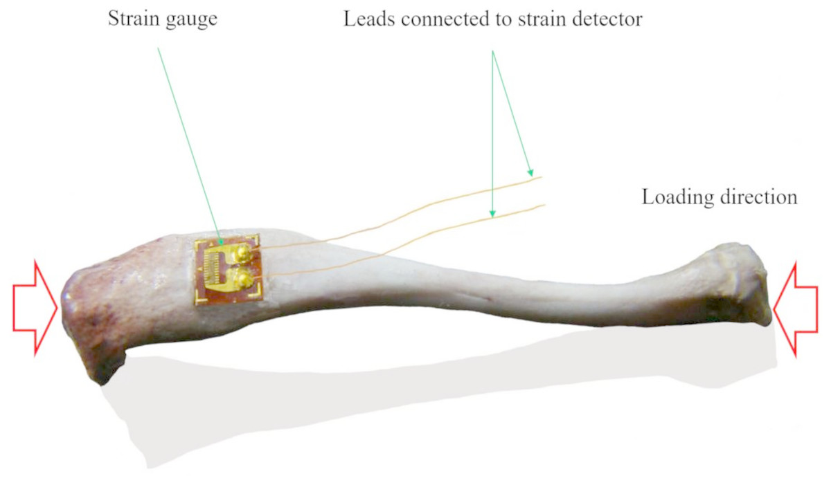The Electric Online Measuring With Strain Gages