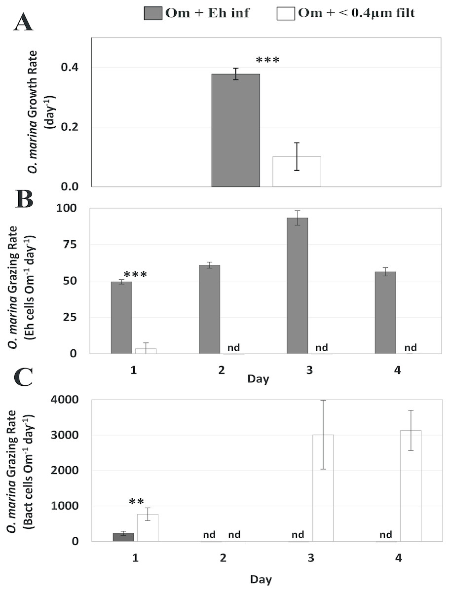 Physiological responses of Oxyrrhis marina to a diet of