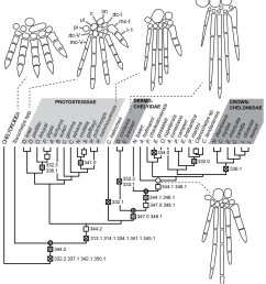 illustration based on a diagram by lehman marks phd used with anatomy of rhinochelys pulchriceps  [ 1069 x 1200 Pixel ]