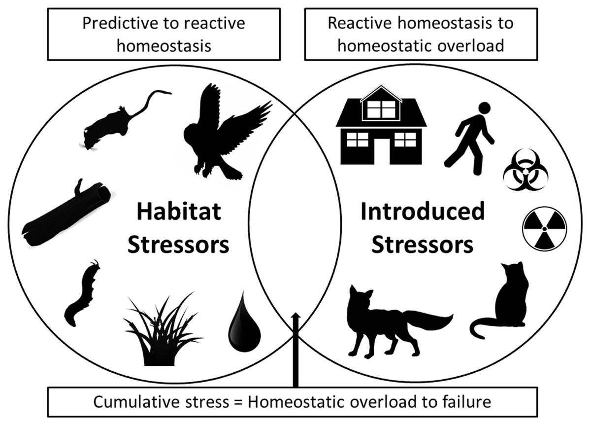 Fear And Stressing In Predator Prey Ecology Considering