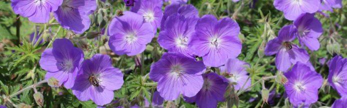 DG flor photothèque horticole
