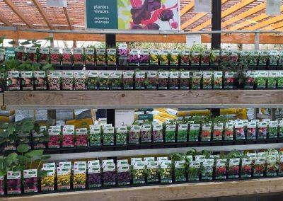 Botanic – étiquettes vivaces