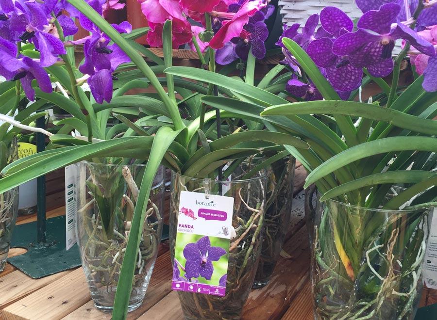 Botanic - plante d'intérieur