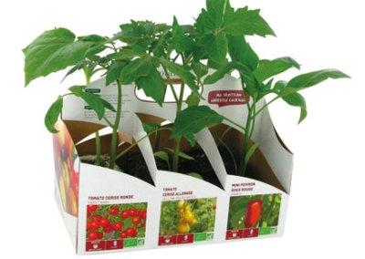 Botanic – Kit potager