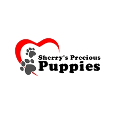 Puppies for Sale from Sherry's Shih Poos Medina, OH
