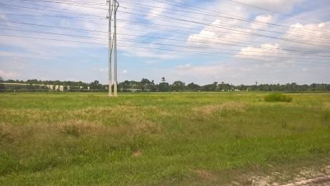 Pasture grass fields