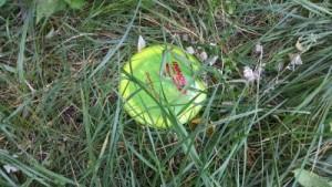 A day-glow Innova Boss hidden in the grass