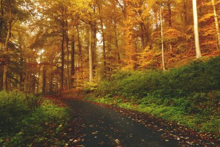 nature trees forest road colors landscape growth farming