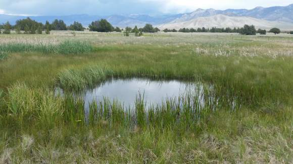 The Swamp Cedars and the Nevada Water Grab