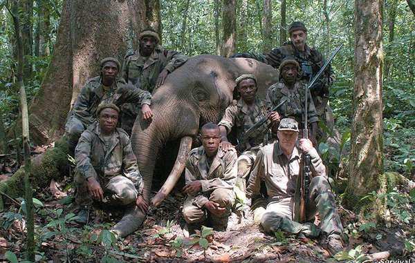 Billionaire's elephant-hunting safaris implicated in