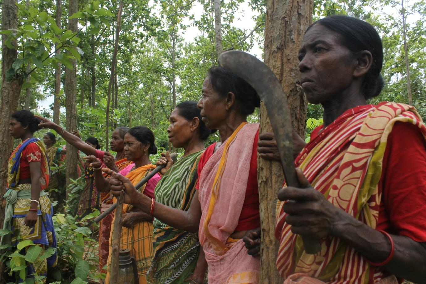 India: With Just Sickles And Sticks, Adivasi Women Save A Forest