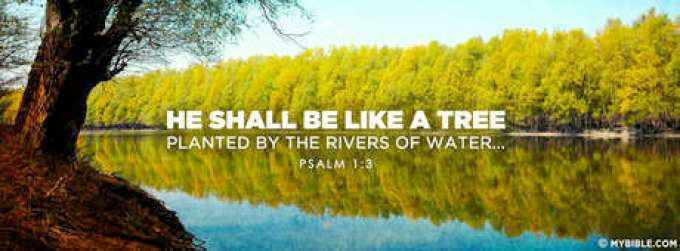 Image result for PLANTED BY THE RIVER OF WATER