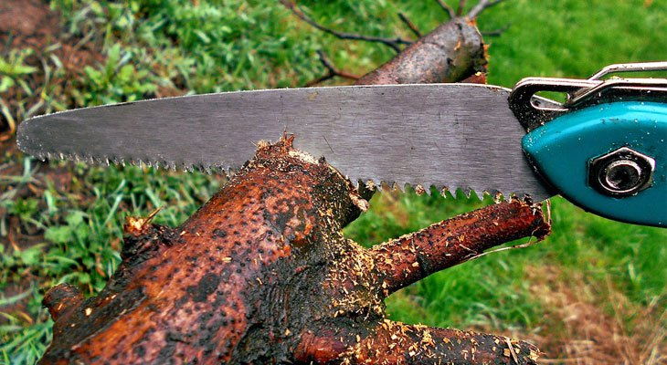 Pruning Saw Definition