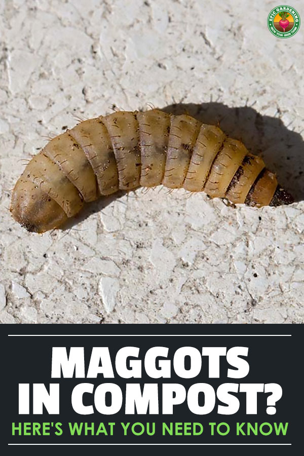 What Kills Maggots