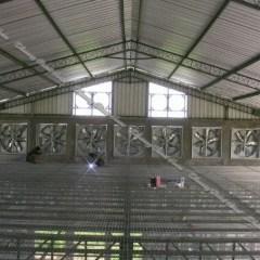 Memilih Gunting Baja Ringan Pilah Pilih Atap Untuk Kandang Ayam Dhanang Closed House