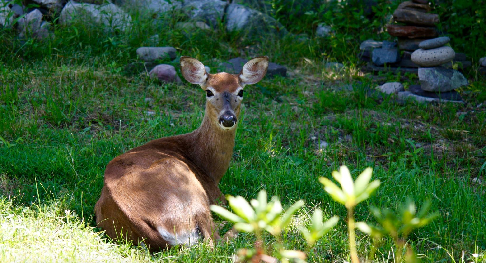 Mothering Lessons from a Three-Legged Doe