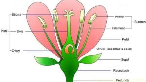 unit-4-lesson-42-parts-of-a-flower-14-638