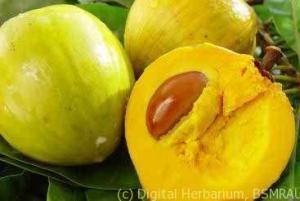 egg-fruit