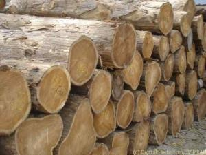 teak-timber-1