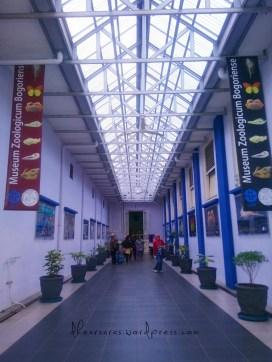 Museum Zoologi.