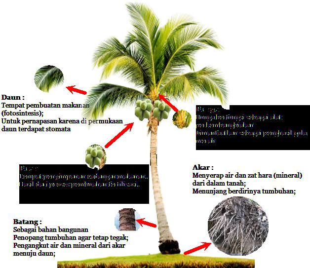 Manfaat dari setiap bagian pohon kelapa  TO COMPLETE YOUR