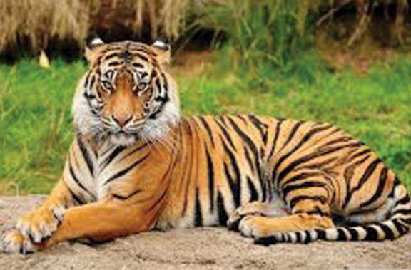 09 July28 tiger day - 1