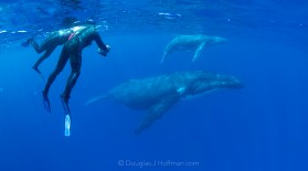 Whale swimming is the ultimate adventure