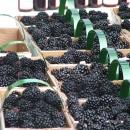 blackberryfestival