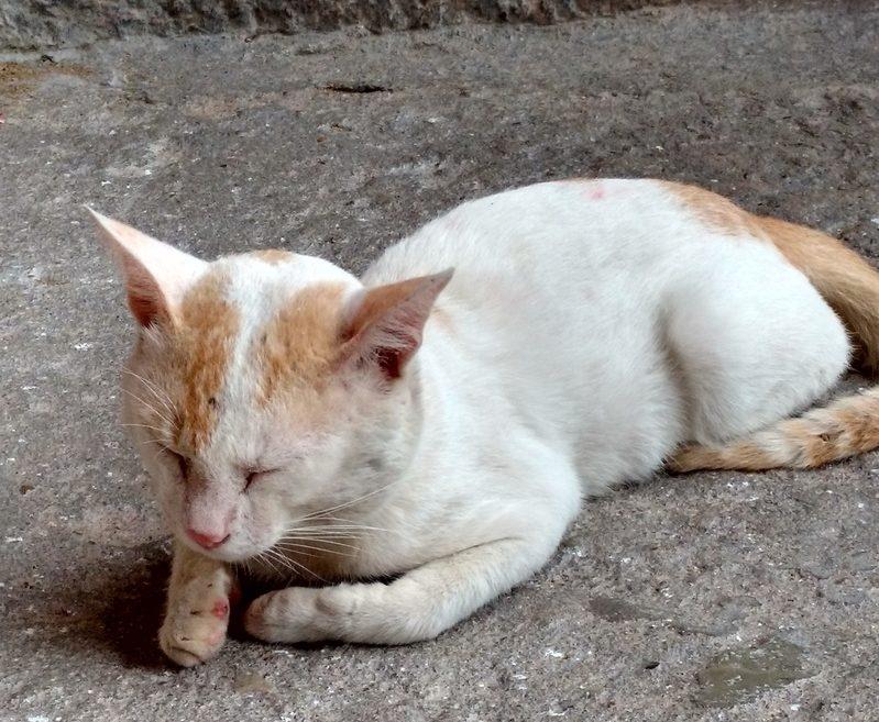 A Meditating Cat