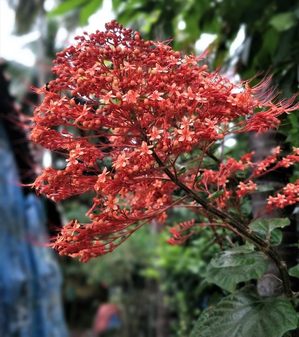 Flowers at a Goan Home