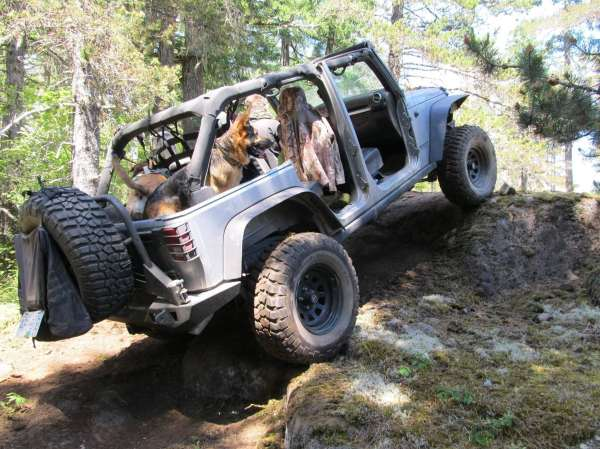 The Jeep Dog Guide to Pet Safety Safford CJDR of Springfield