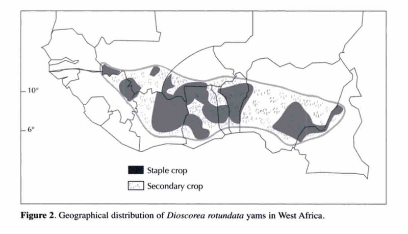 Yams in Africa and during the Middle Passage · Botanical