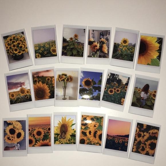 tumblr sunflower polaroid pictures