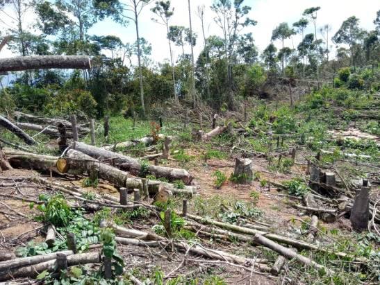 Produtor desmata 17 mil metros quadrados de mata nativa para plantar café no Caparaó