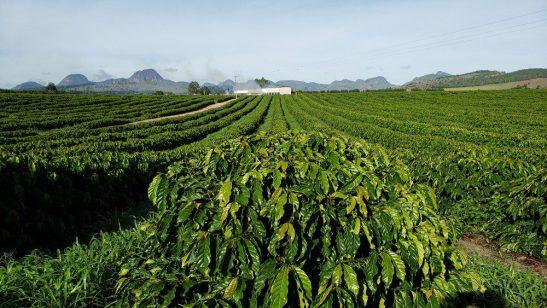 Produtores rurais terão R$ 16 bilhões para custeio antecipado da safra